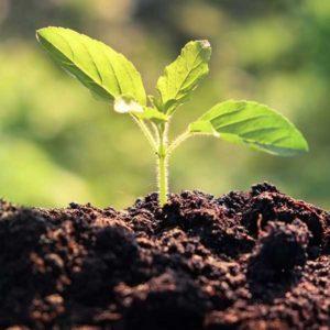 bio-char-soil-conservation